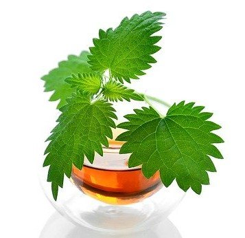 nettle is also great for men's health