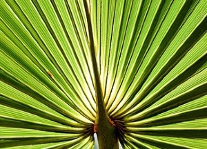also good for men s health is saw palmetto